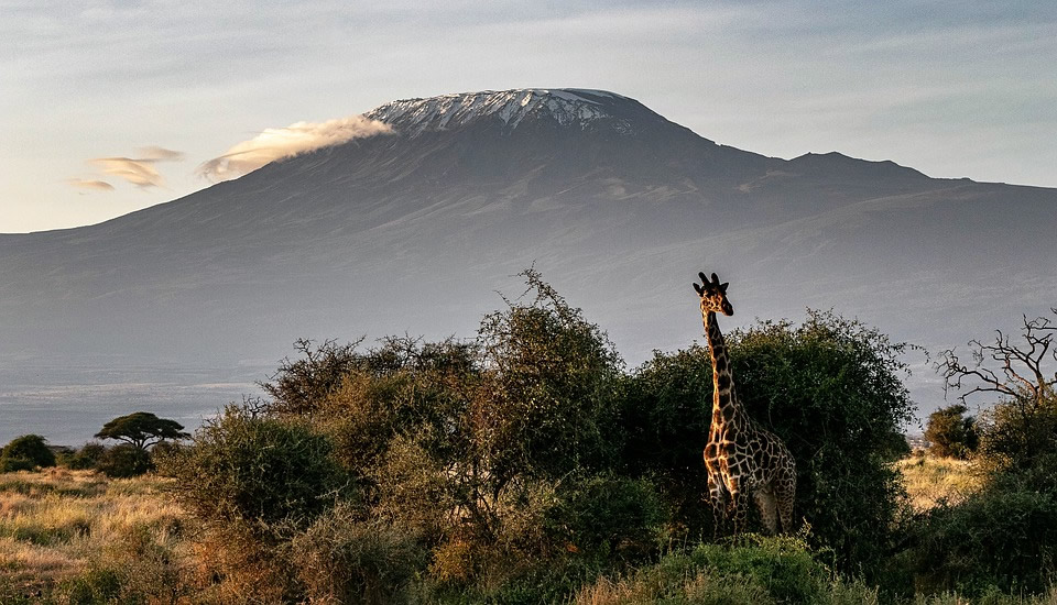 Kenya wild