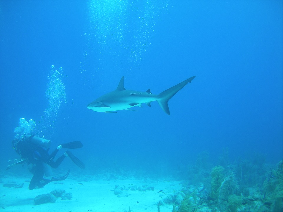 séjour aux Bahamas