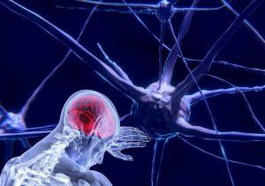 Cellules nerveuses